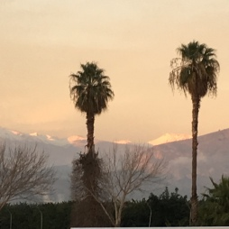 Snow and palm trees